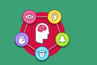 5 חושים ומוח באמצע